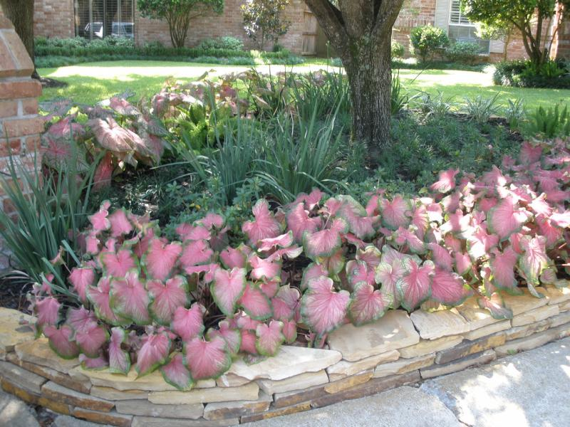 Flagstone Border with BEAUTIFUL planting